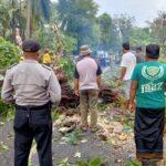 Puting Beliung Tumbangkan Pohon Asam di Sumenep, Akses Jalan Macet