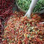Harga Cabai Naik 50 Persen, Penyumbang Inflasi Terbesar di Jember