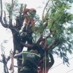Tersengat Listrik, Pencari Rambanan di Mojokerto Meregang Nyawa di atas Pohon