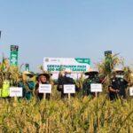 ACT Janji Beli Gabah Petani Mojokerto Lebih Tinggi dari Harga Pasar