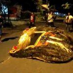 VIDEO: Patrol Sahur dengan Reog Ala Warga Jember
