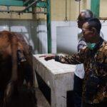 Disnak Keswan Situbondo Jamin Daging di Sejumlah Pasar Aman dan Halal Konsumsi