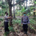 Pemuda di Kalibaru Banyuwangi Gantung Diri di Pohon Kelengkeng
