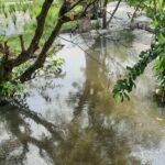 Petani Dua Desa di Jombang Teriak Sawahnya Tercemar Limbah, Diduga dari Pabrik Ayam