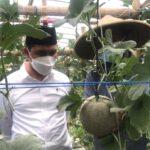 Dikunjungi Wabup Mojokerto, Petani Melon Minta Pengembangan Wisata Berbasis Pertanian